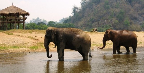 Talk Travel Asia: Plight of Asian Elephants with John Roberts
