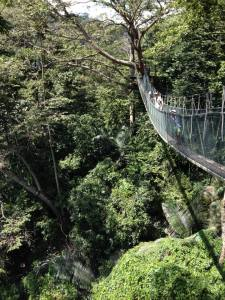 Canopy walk at FRIM