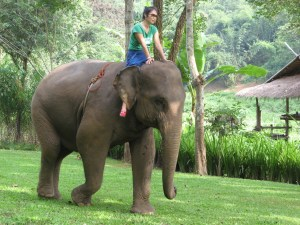 A 'mahout' course at the Anantara Golden Triangle, Thailand