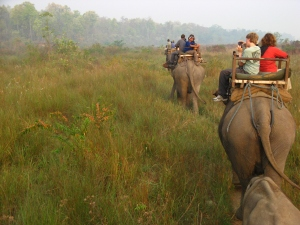 Looking for rhinos in Chitwan National Park