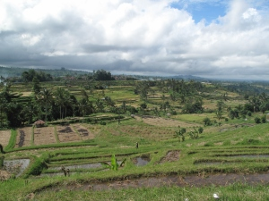 Bali's Iconic Rice Fields on Talk Travel Asia Podcast