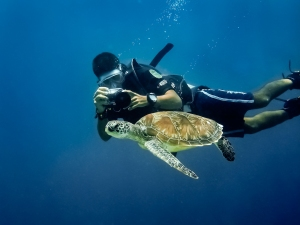 Photographing Turtles; courtesy Wikipedia
