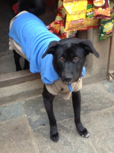 Dog in Shirt - Nepal